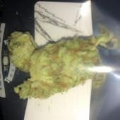 Middle Fork Bud