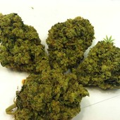 TRAINWRECK - www.iambud.org