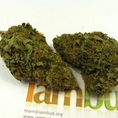 Strawberry Cough - www.iambud.org