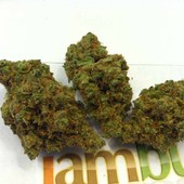 SUPER SILVER HAZE - www.iambud.org