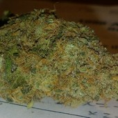 Kings Kush
