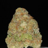 Black Diamond bud