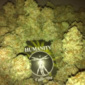 Jack Herer from Hummanity Collective
