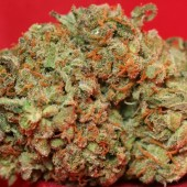 Jack Herer