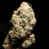 King Berry Kush