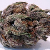 purple kush