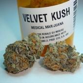 Velvet kush