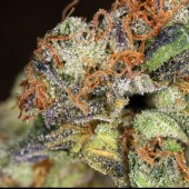 Fire OG macro shot