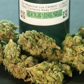 sour diesel