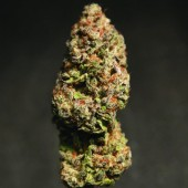 Blackberry kush
