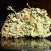 vanilla kush weed