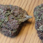 Purple Cream