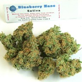 Blueberry haze