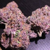 Super Purple Urkle nugs