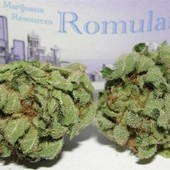 Romulan