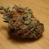 Afghan Kush cannabis