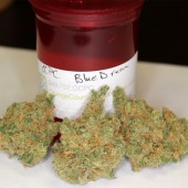 Blue Dream buds from OCPC