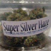 Super Silver Haze