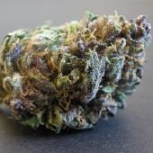 purple hindu bud