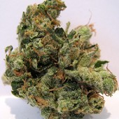 NYC Diesel