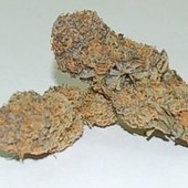 Purple snowcap