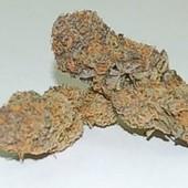 Purple snowcap