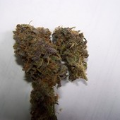 Mid Sativa Bud Great stuff come on hard wont disappoint you
