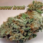 Vancouver Krush